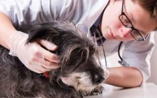 Болезни суставов у собак симптомы и лечение