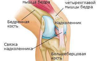 Какие особенности строения сустава делают его прочным подвижным