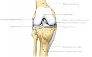 Гимнастика для коленных суставов при артрозе