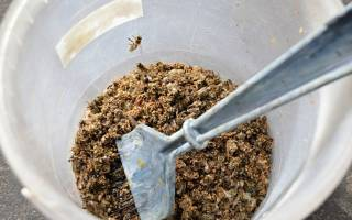 Настойка из подмора пчел для суставов