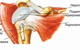 Сустав между плечевой костью и лопаткой