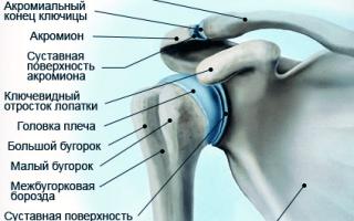Артрит плечевого сустава правой руки как лечить
