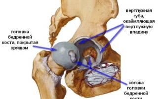 Ядра окостенения тазобедренных суставов норма