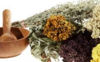 Лечение артроза травами народные рецепты