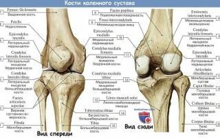 Мениск это коленный сустав фото