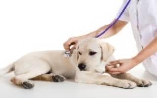 Артрит у собак как лечить
