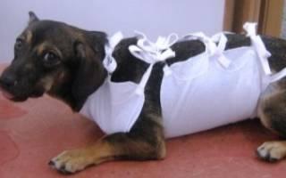 Сколько стоит удалить грыжу у собаки