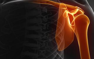 Строение плечевого сустава и мышцы приводящей его в движение